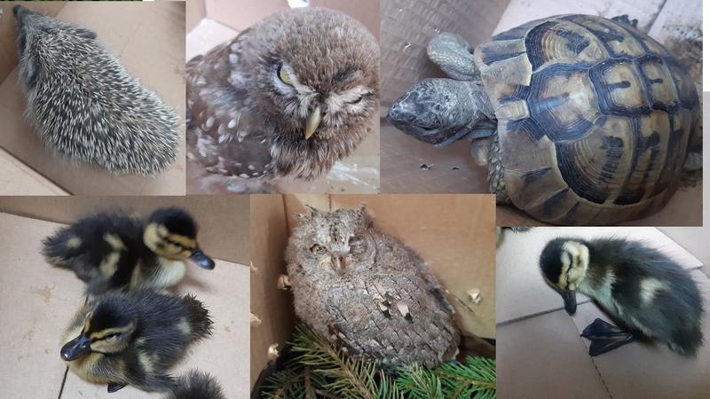 Девет животни спасиха от РИОСВ – Пловдив през почивните дни - 01